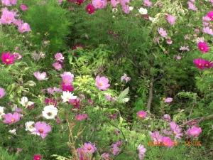 ...to make a garden